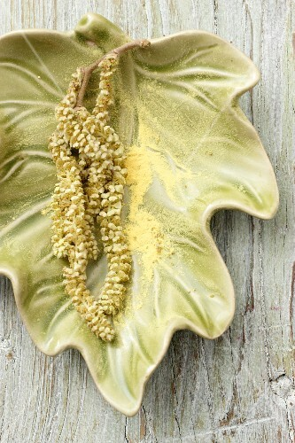 Hazelnut flowers with pollen in a leaf-shaped dish