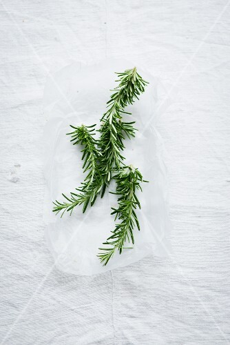 Sprigs of rosemary on white paper