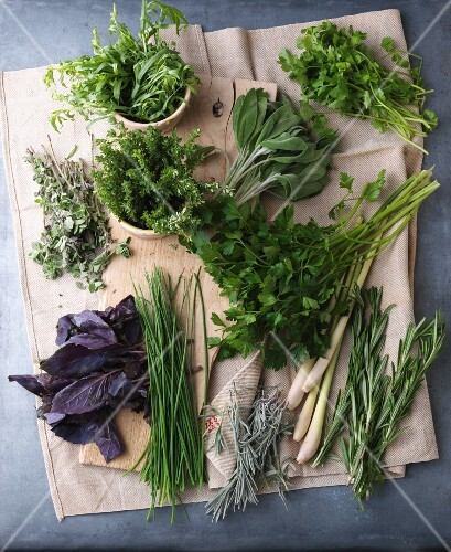 An arrangement of various fresh herbs