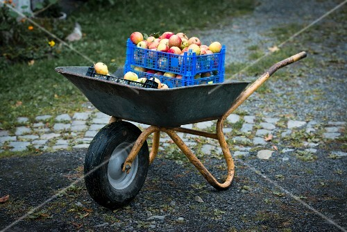 Crates of apples in a wheelbarrow