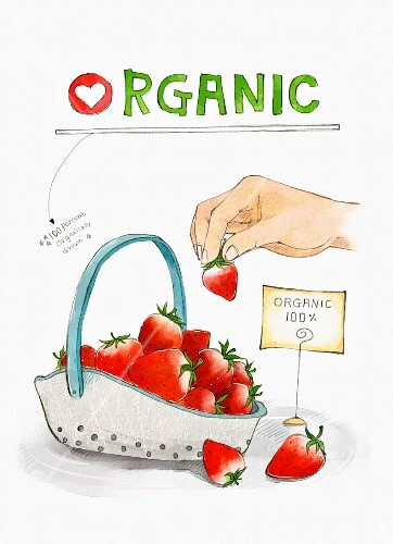 Organic strawberries (illustration)