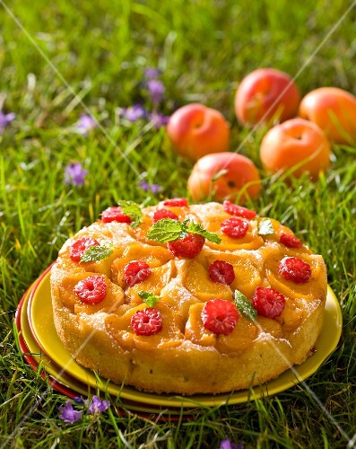 Caramelised apricot cake on a plate in the grass