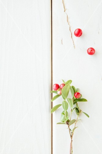 A sprig of lingonberries on a white surface