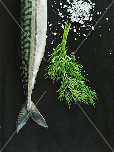 Fresh mackerel with dill and coarse salt (seen from above)