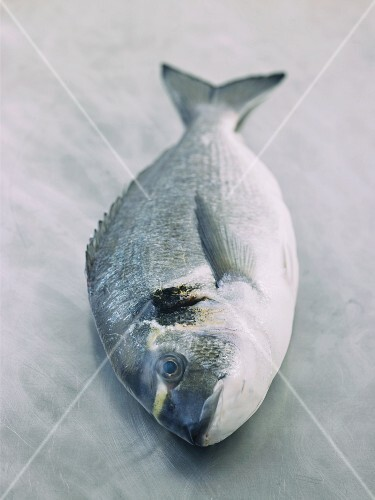 A gilt head seabream