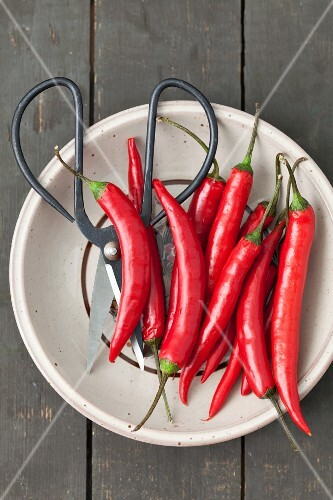 Red chilli peppers and a pair of herb scissors