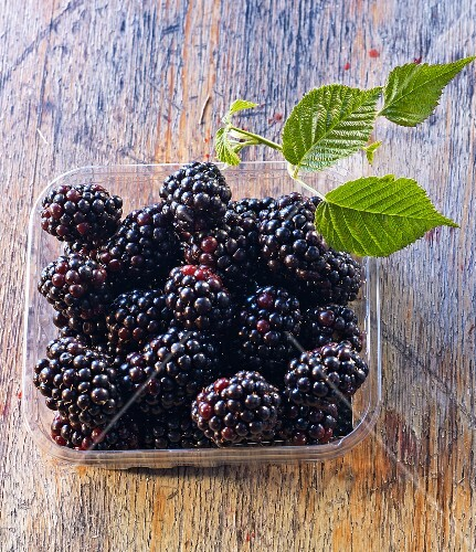 Blackberries and blackberry leaves in a plastic punnet