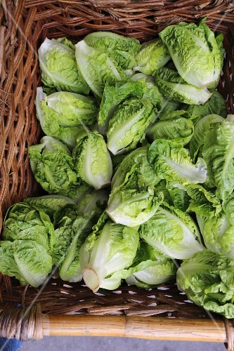 Organic little gem lettuces in a woven basket at a market