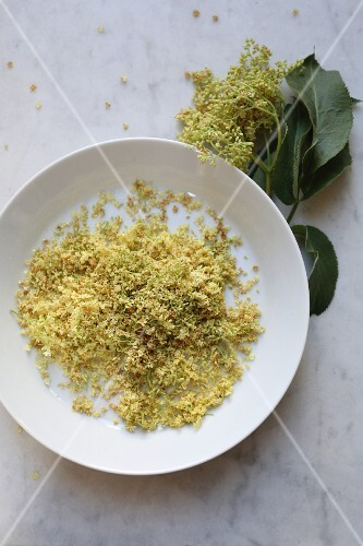 Wilted elderflowers on a plate (seen from above)