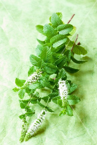 Fresh mint with flowers