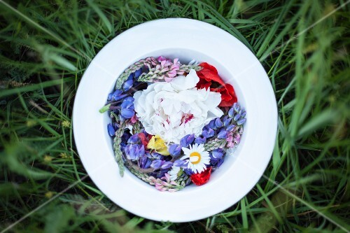 Various wild flowers on a plate in a grass (seen from above)