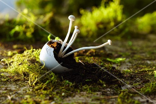 Enoki mushrooms in an eggshell on earth and moss