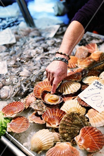 A hand pointing at scallops at the fish market (Rialto market) in Venice
