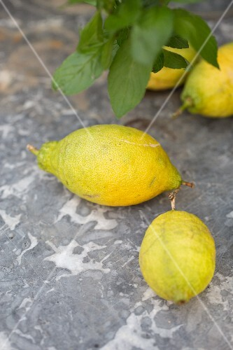 Lemons from a tree on a grey marble surface