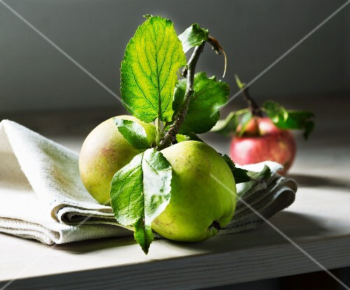 Freshly harvested apples on a twig with leaves