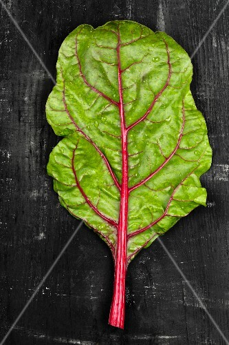 A leaf of rhubarb chard on a dark surface
