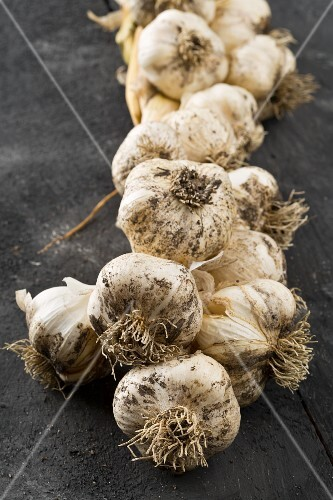 Freshly harvested garlic tied in a braid