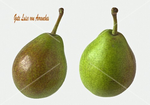 Two Gute Luise von Avranches pears