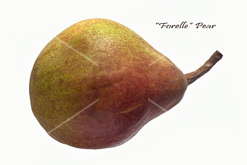 A Forelle pear on a white surface
