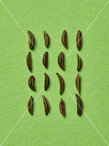 Caraway seeds in rows on a green surface (seen from above)