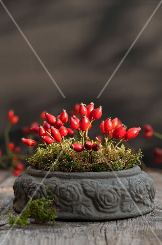 Rose hips and moss in a stone bowl on a wooden table