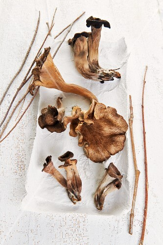 King trumpet mushrooms on a white surface