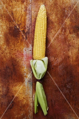 A corn cob with leaves