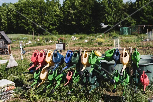 Rows of watering cans in a garden