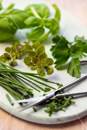 Fresh herbs with scissors