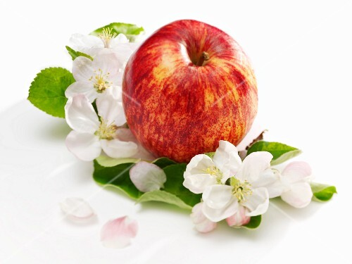 An apple, apple blossom and apple leaves