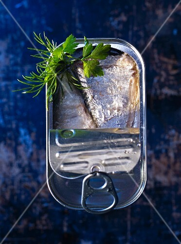 Oily sardines in a tin with dill and flat leaf parsley (seen from above)