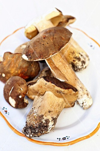 Fresh porcini mushrooms on a rustic plate