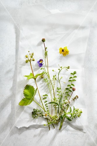 An arrangement of various fresh herbs and flowers