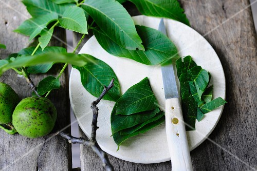 Sliced walnut leaves on a plate with a knife