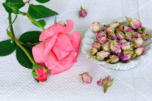 Rose and rose buds