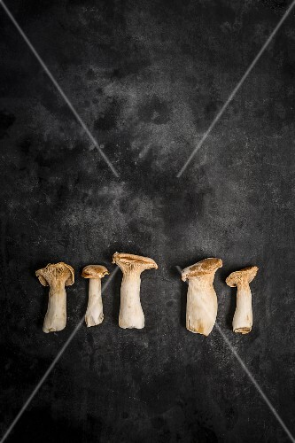 King trumpet mushrooms on a grey surface