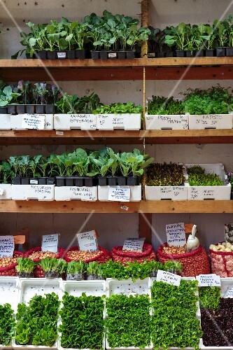 Herbs and salad plants for sale in Athens, Greece