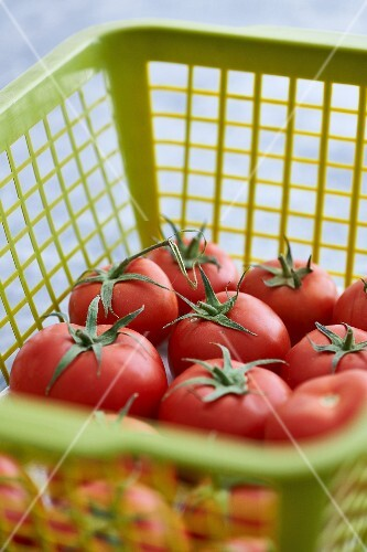 Fresh tomatoes in a plastic basket