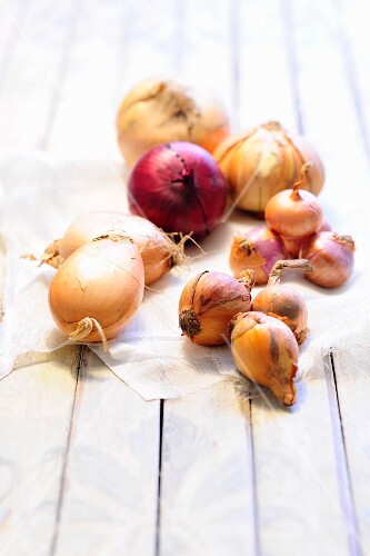 An arrangement of various onions