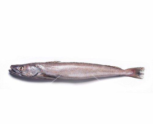 A whiting against a white background