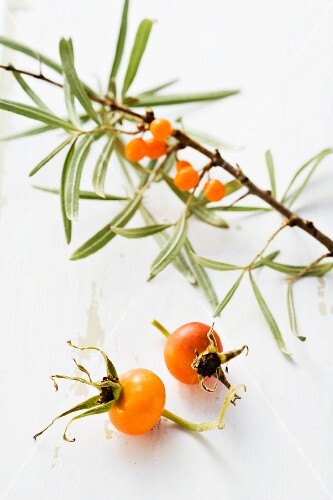 Sea buckthorn and rosehips