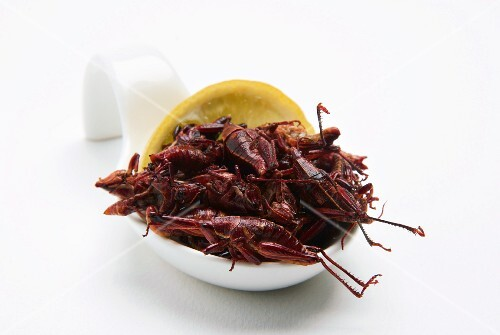 Fried grasshopper with lemon