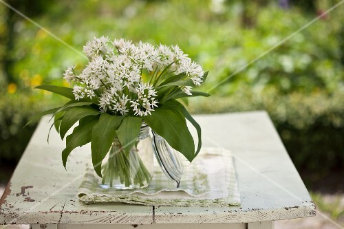 Wild garlic with flowers in a glass