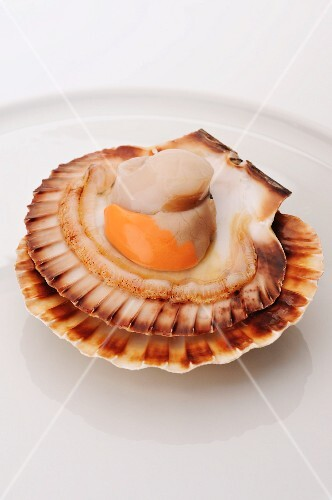 Scallop in the shell