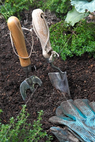 Garden tools and a gardening gloves in a bed of herbs
