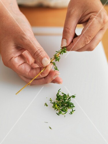 Thyme leaves being torn of the twig