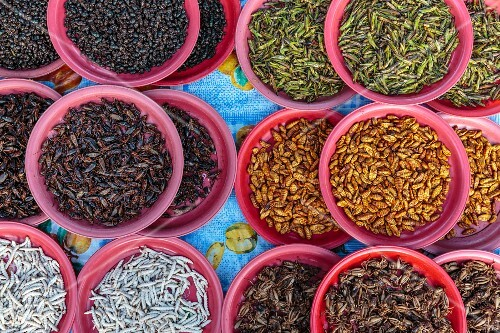 A market stand with many different edible insects in Vientiane, Laos