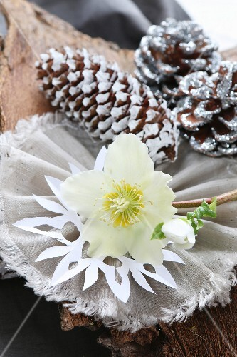 Original Christmas arrangement of white hellebore and silver and white pine cones on bark