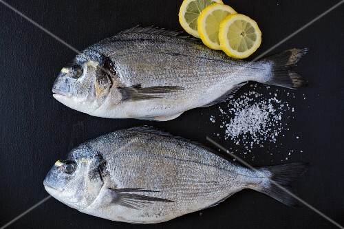 Two seabream with salt and lemon slices on a black wooden surface (ingredients for seabream in a salt crust)
