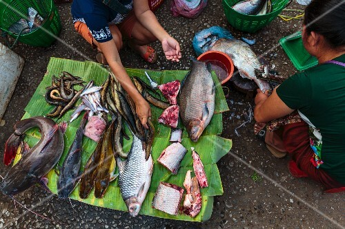 Fresh fish from the Mekong on a banana leaf at a market in Luang Prabang, Laos